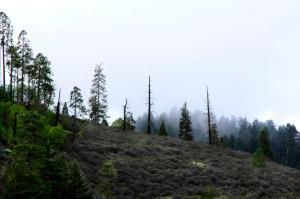 landing_trees_fog