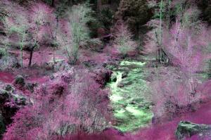 taylor creek siskyou