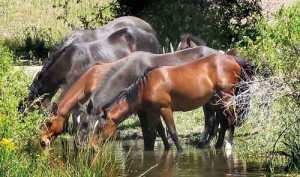 murderer's creek horses