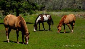 cascade mtn pasture