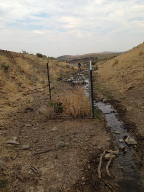 public lands and cattle