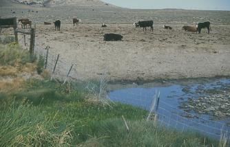 ranch-11