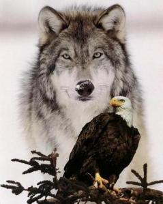wolf-eagle